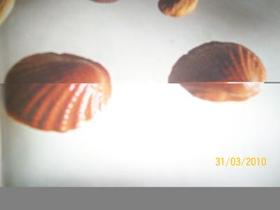 choco caramel delight shells