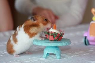 Hammie Bday Cake - Hamster birthday cake