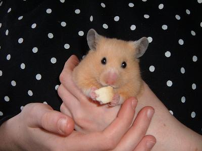my hamster enjoying Bread Bananza