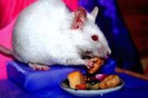 Poppy eating her snack
