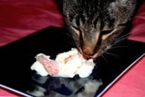 Nemo eating tuna ice cream