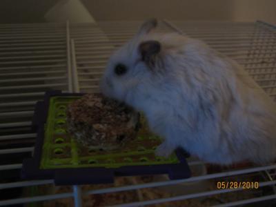 My pet hamster, Cotton, loves it!